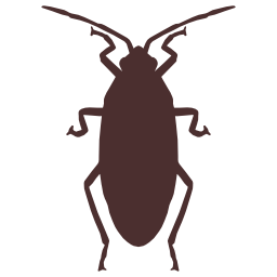 roaches suck